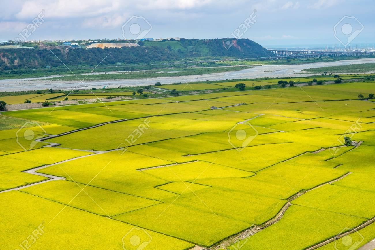 Rice field of Lotus valley in Waipu, Taichung, Taiwan - 81553578