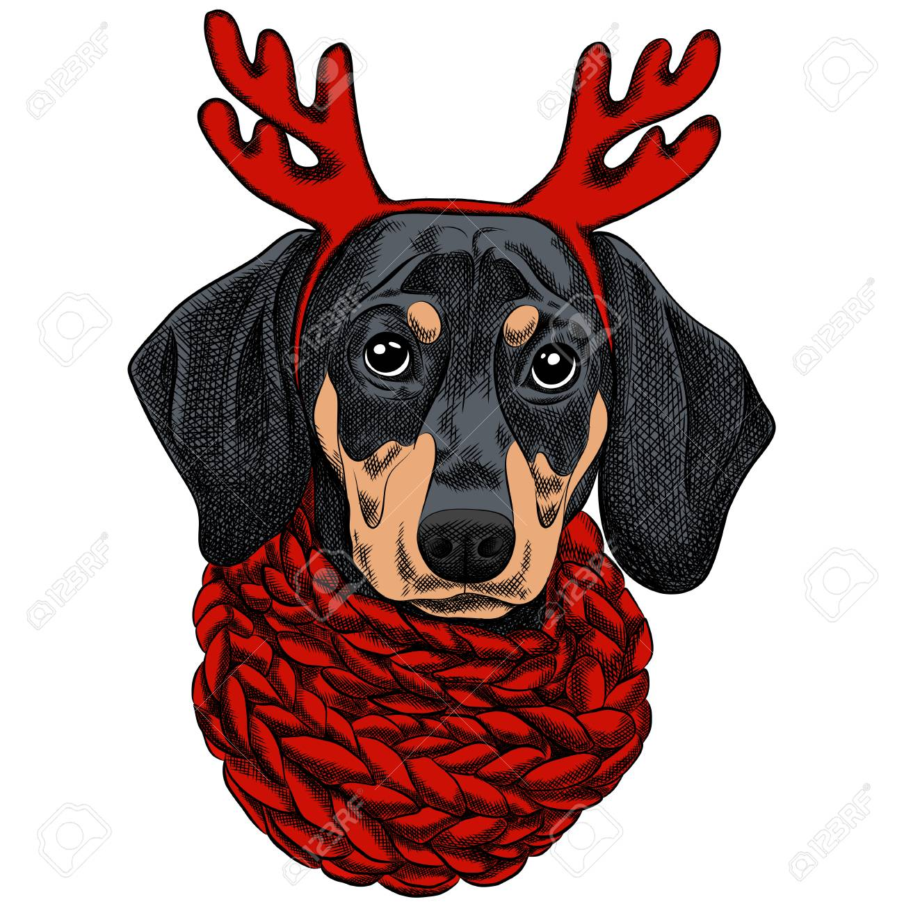 ad655e617c0 A Vector illustration of a Dachshund dog for a Christmas card. Dachshund  with a red knitted warm scarf and horns of a reindeer. Merry Christmas in  the year ...
