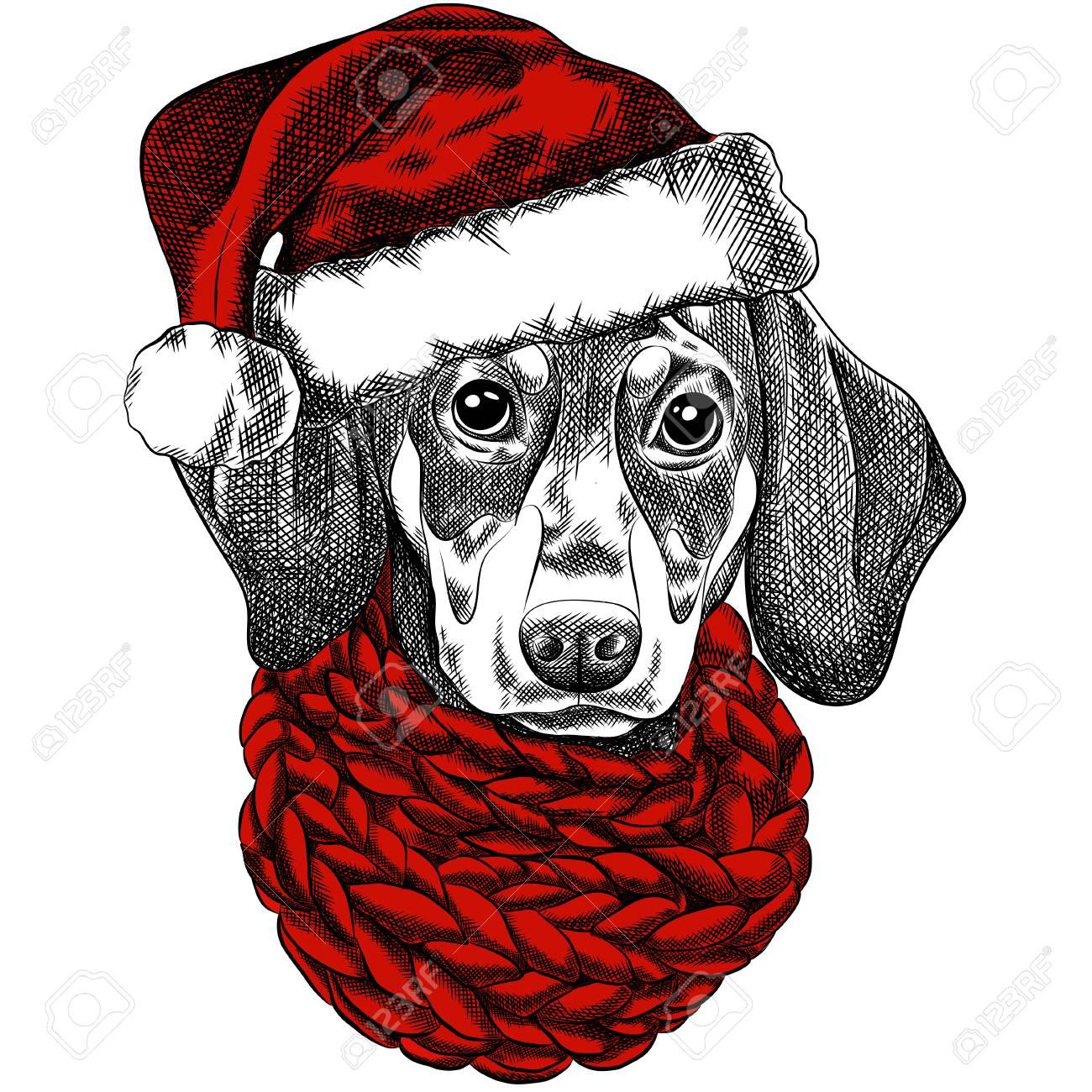Vector Illustration Of A Dachshund Dog For A Christmas Card ...