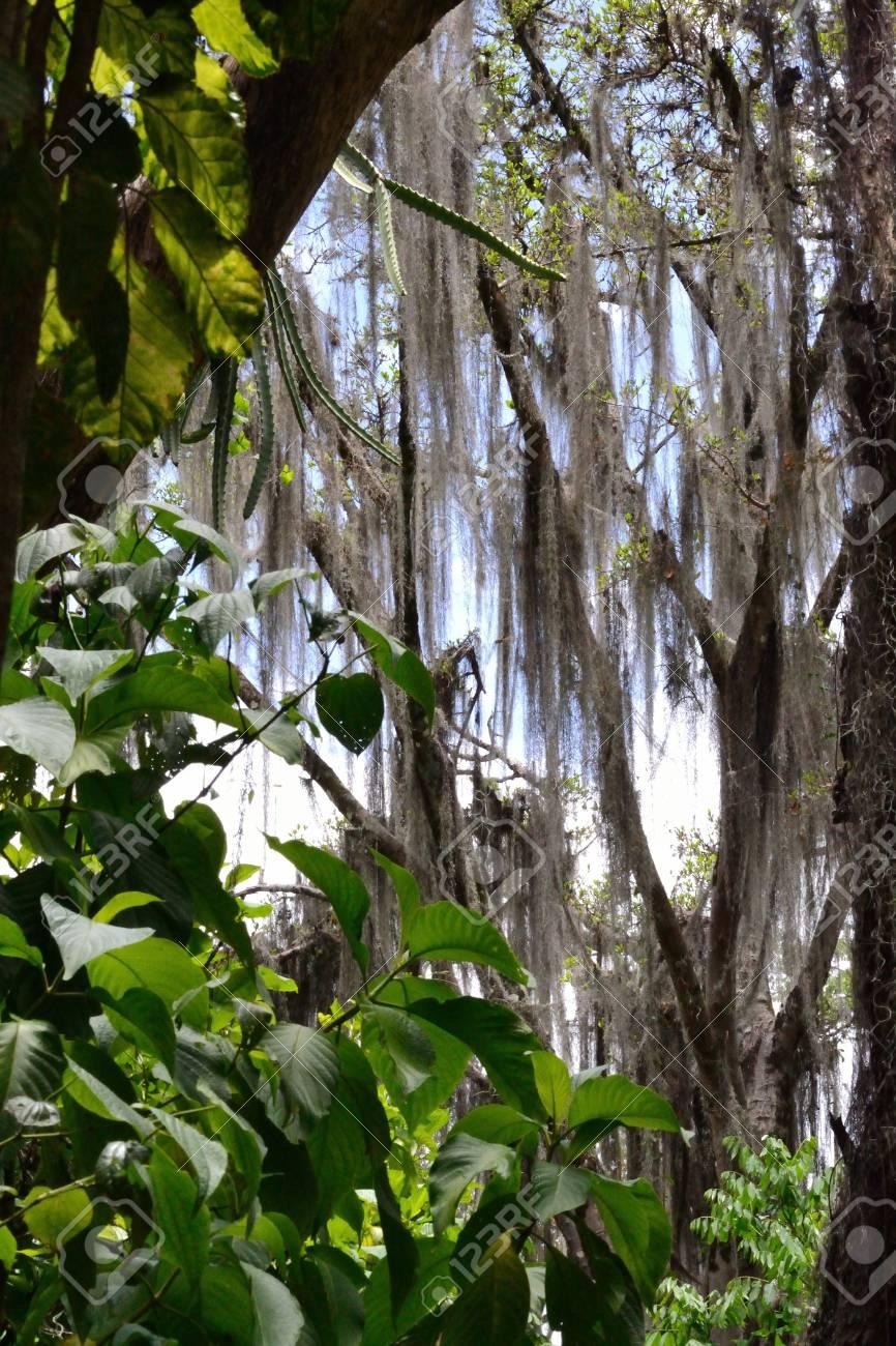nature portrair Stock Photo - 13222890