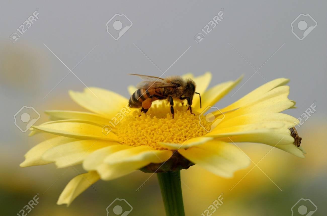 working bee Stock Photo - 4918985