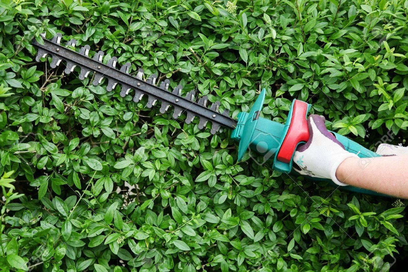 Beschneiden Gartenhecke Lizenzfreie Fotos Bilder Und Stock