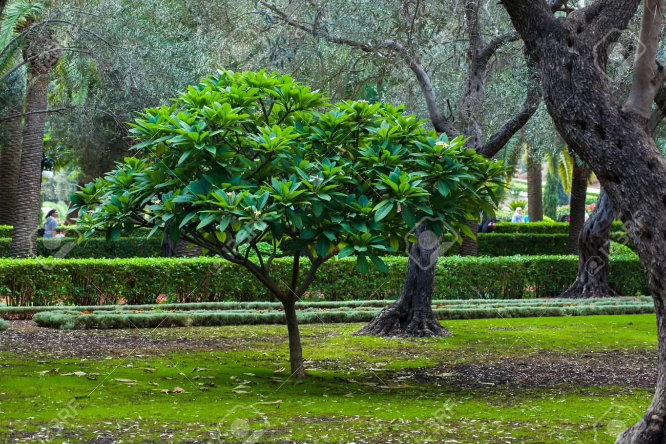 Petit Arbre Vert Dans Le Jardin Ensoleille