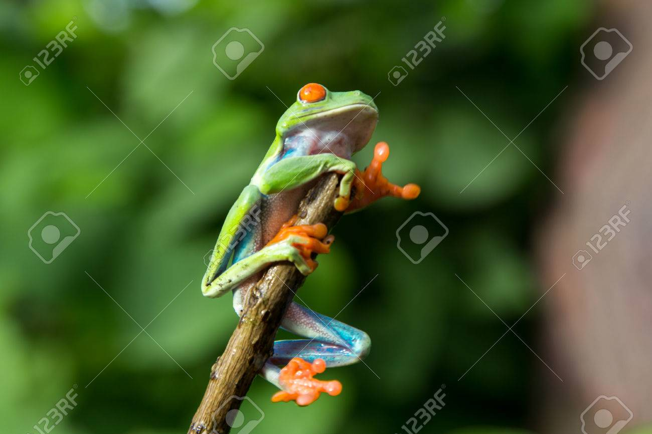 Fein Kermit Der Frosch Färbung Seite Galerie - Malvorlagen Von ...