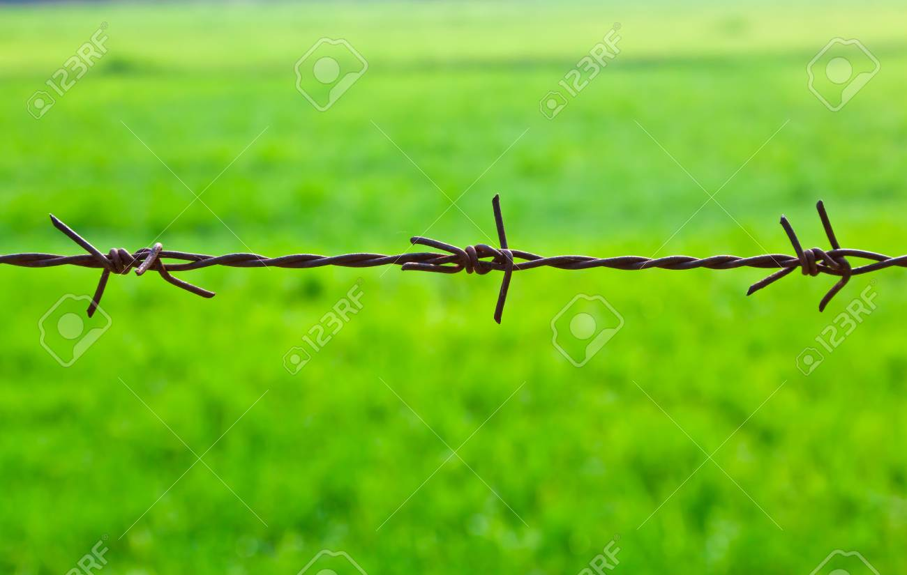 The closeup image of the old barbed wire Stock Photo - 12660904