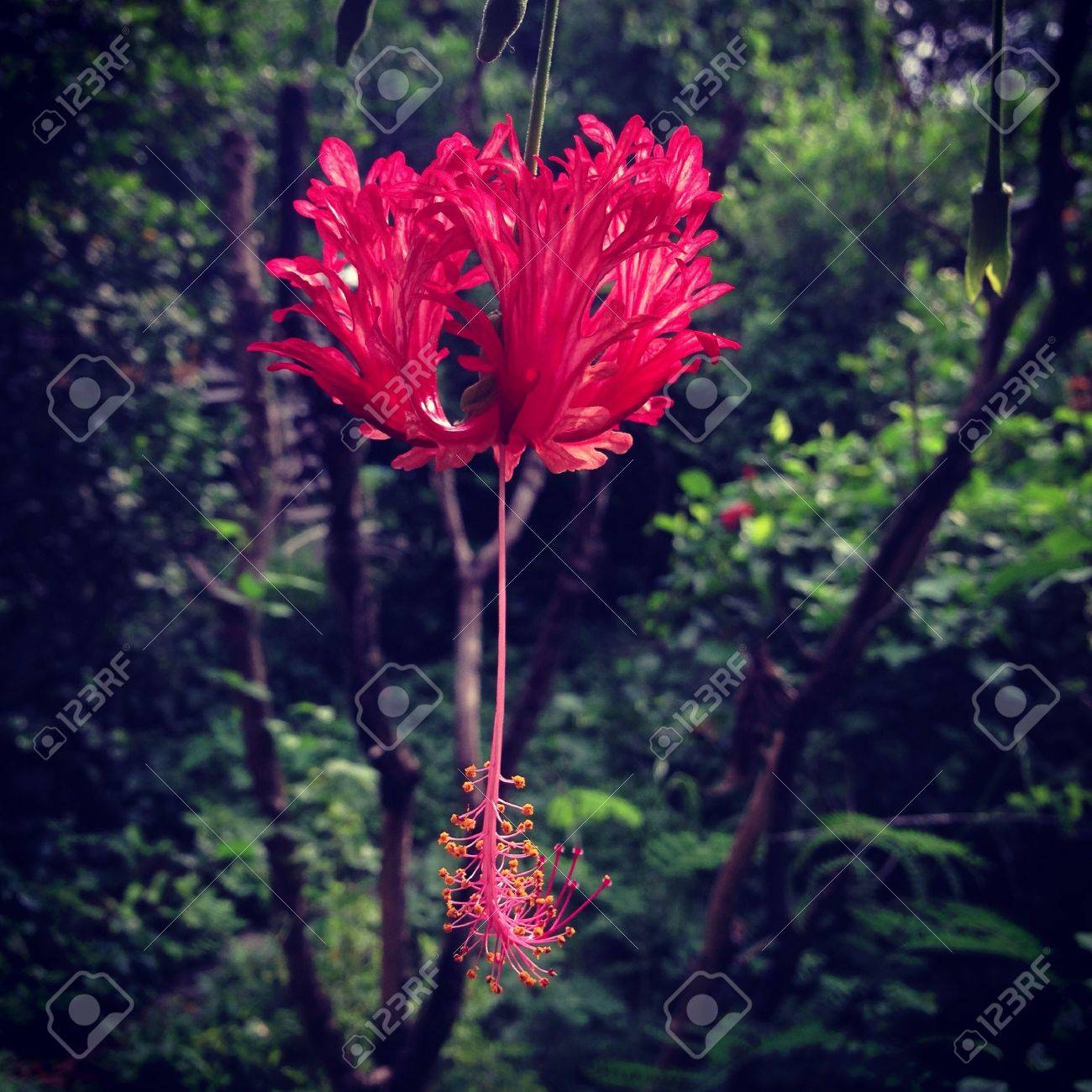 The red flower in the garden - 21342136