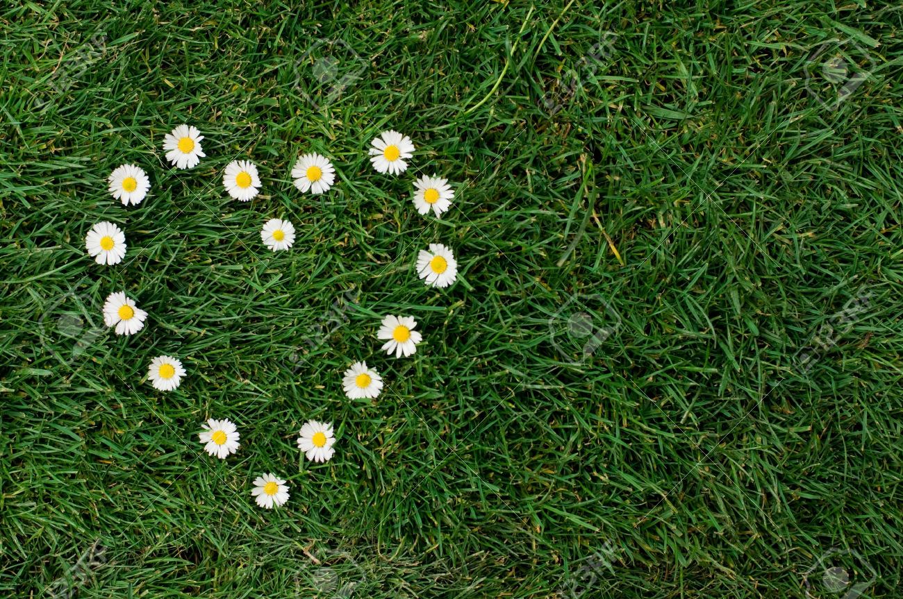 Heart shape of daisy in a meadow symbol of love for the nature heart shape of daisy in a meadow symbol of love for the nature and the izmirmasajfo