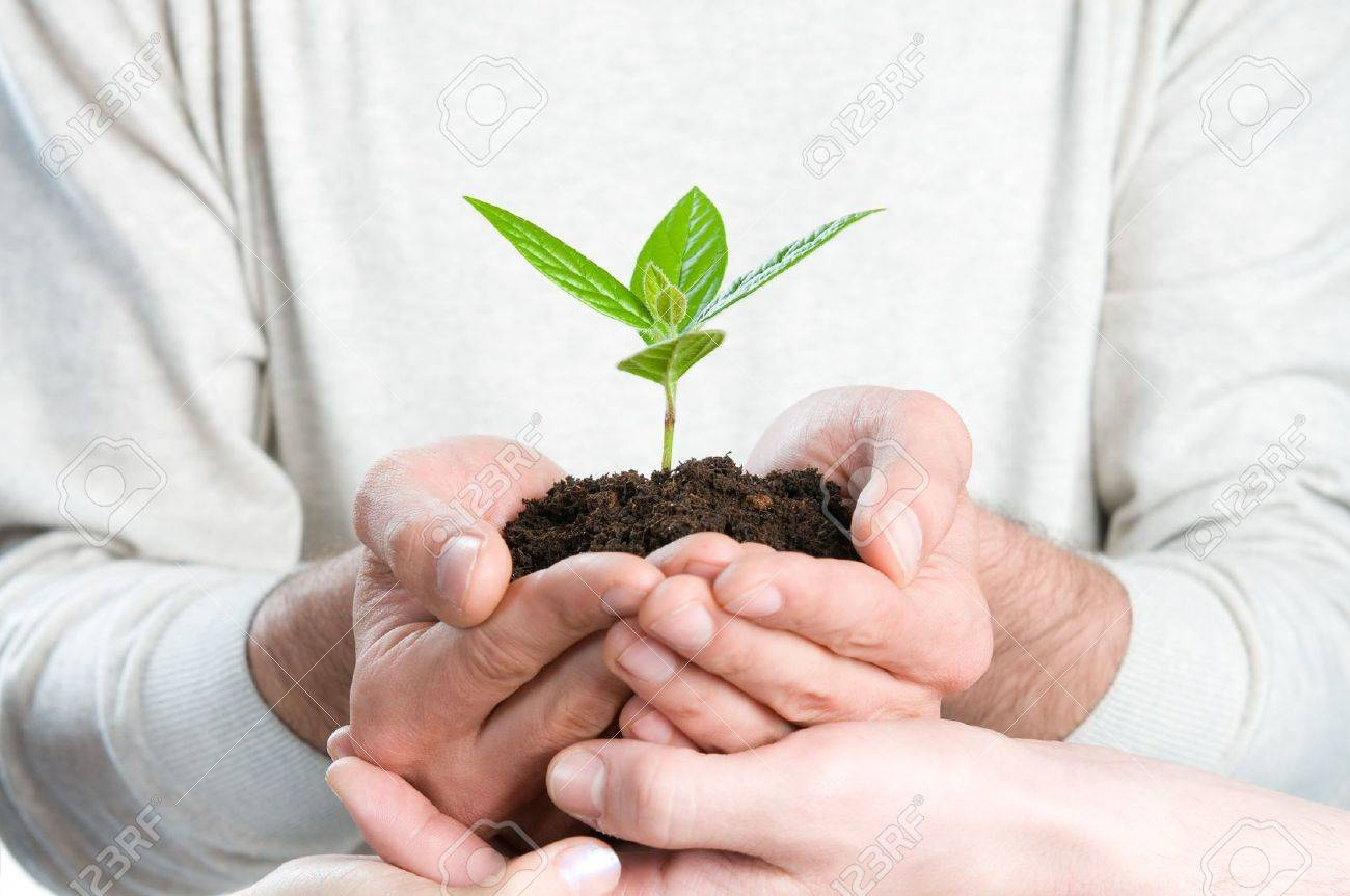 Group of hands holding a fresh green sprout, symbol of growing business, environmental conservation and bank savings. Stock Photo - 8235684