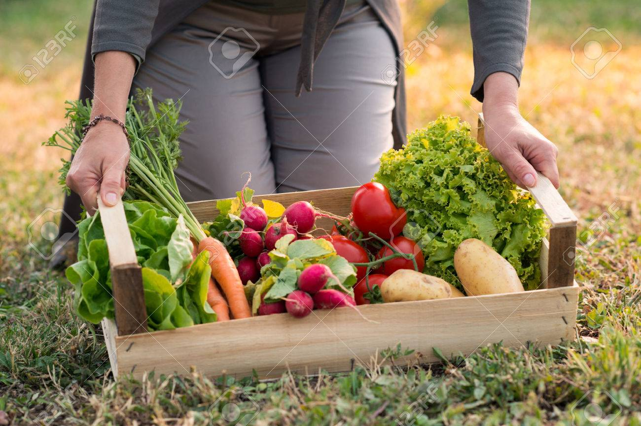 Close up Of Woman Holding Crate With Vegetable Stock Photo - 31178951