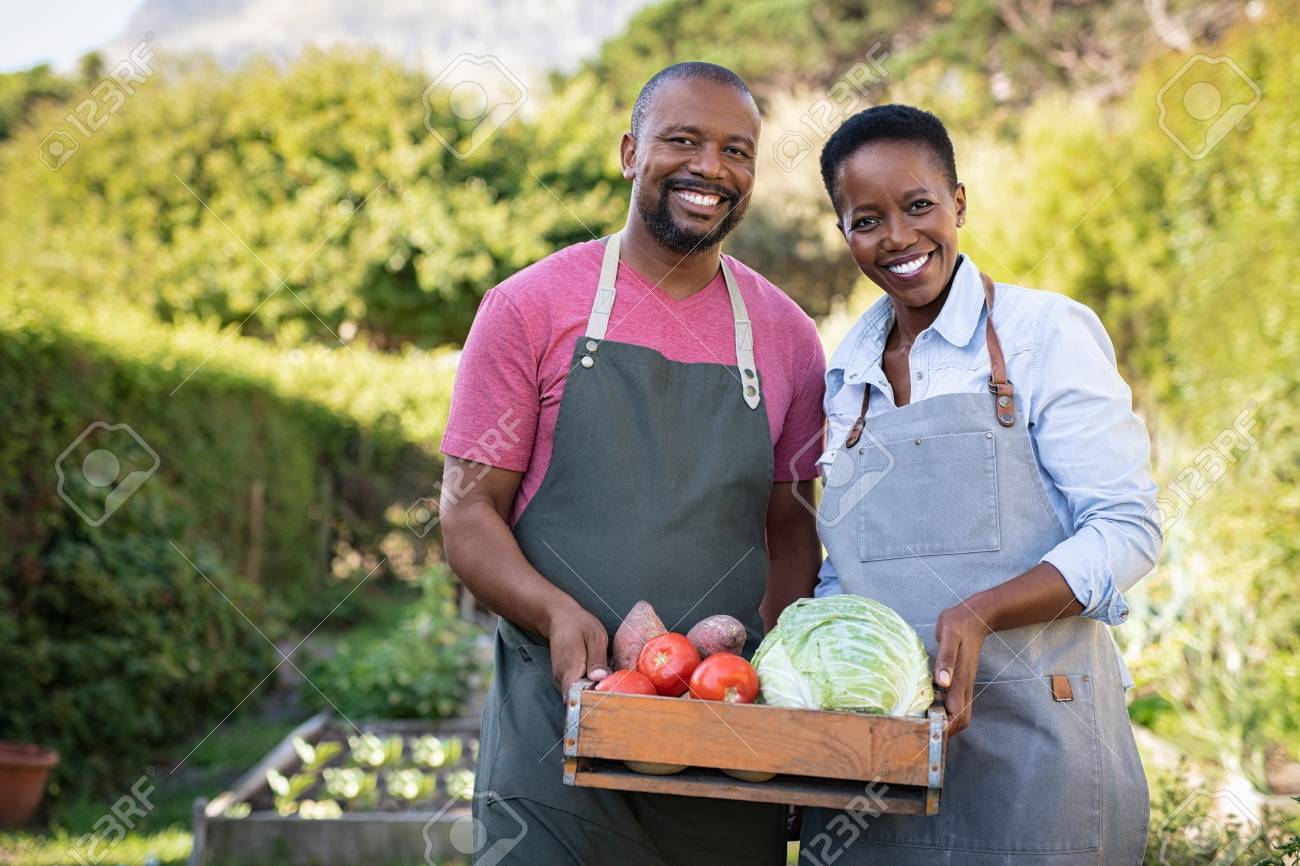 Portrait of happy black farmer couple holding a crate of bio vegetables in the farm. Smiling african man and mature woman showing box of vegetables and looking at camera. Satisfied farmers holding a basket of harvested vegetables. - 124982708