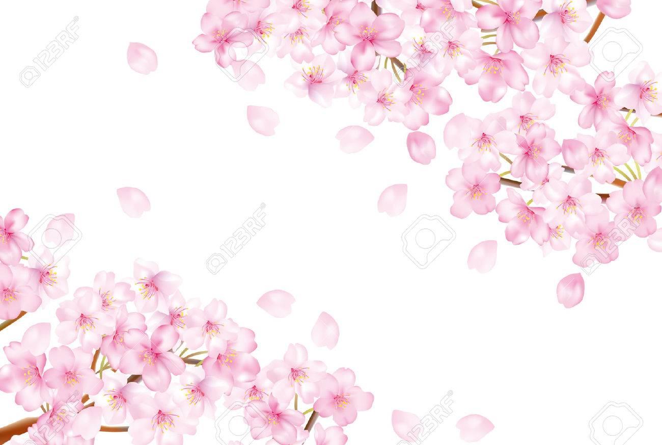 美しい桜の木のイラスト の写真素材画像素材 Image 38389783