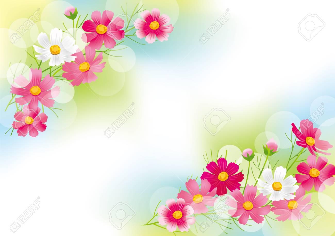 Beautiful cosmos flower - 105916870