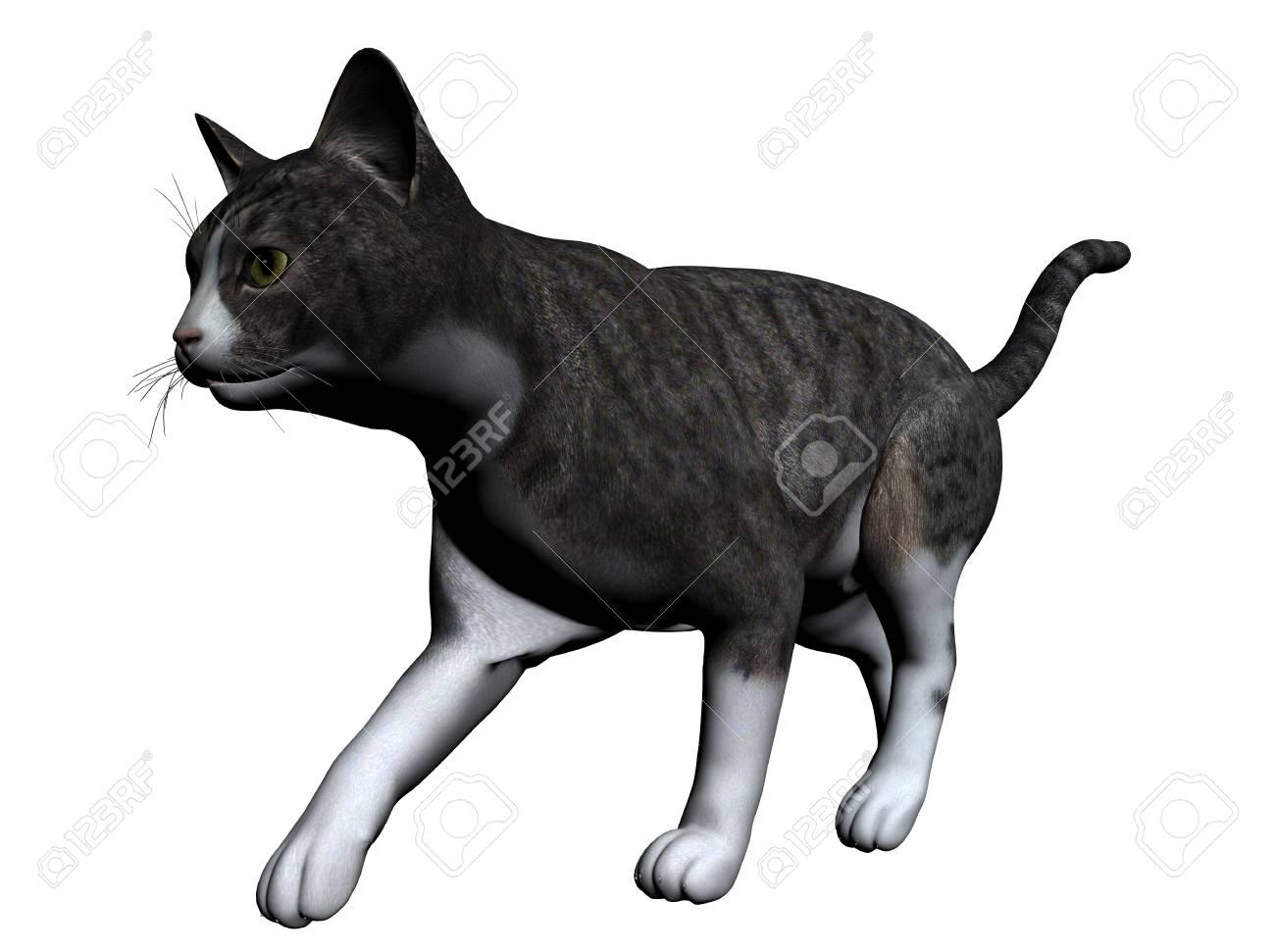 Cat Stock Photo - 7149357