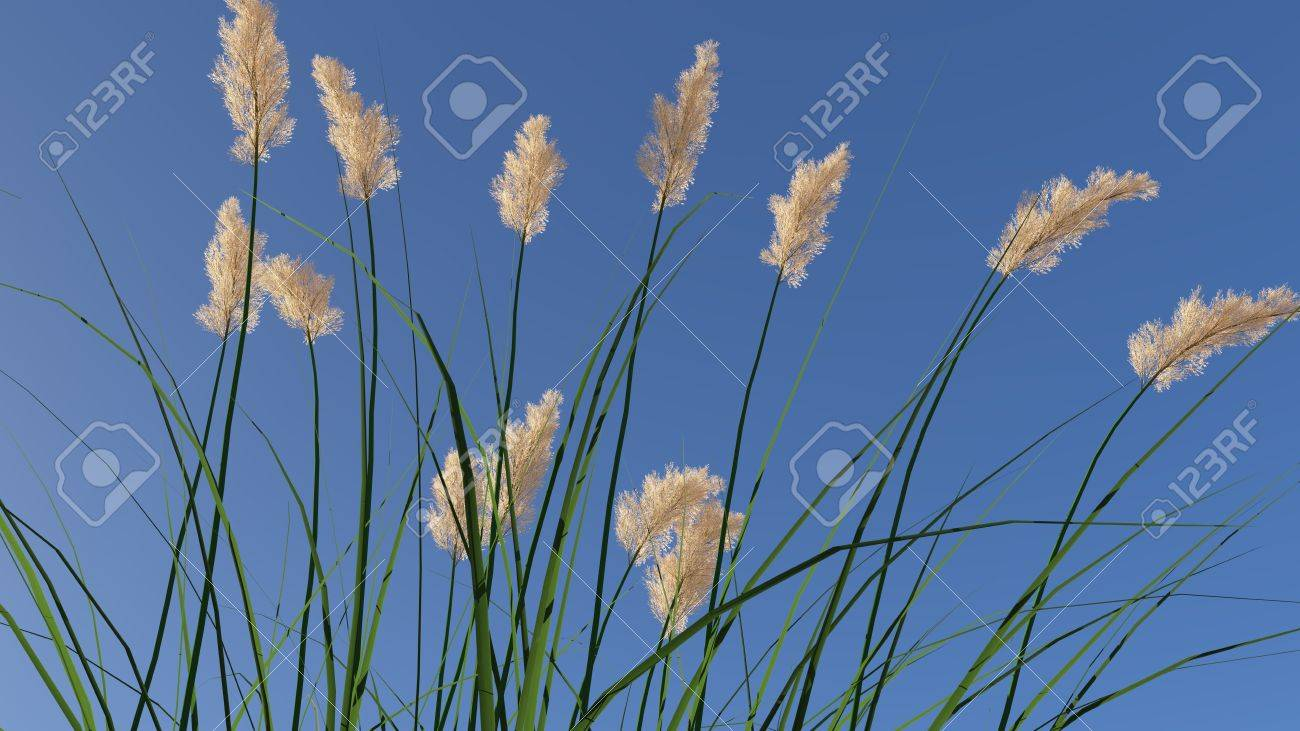 weidelgras