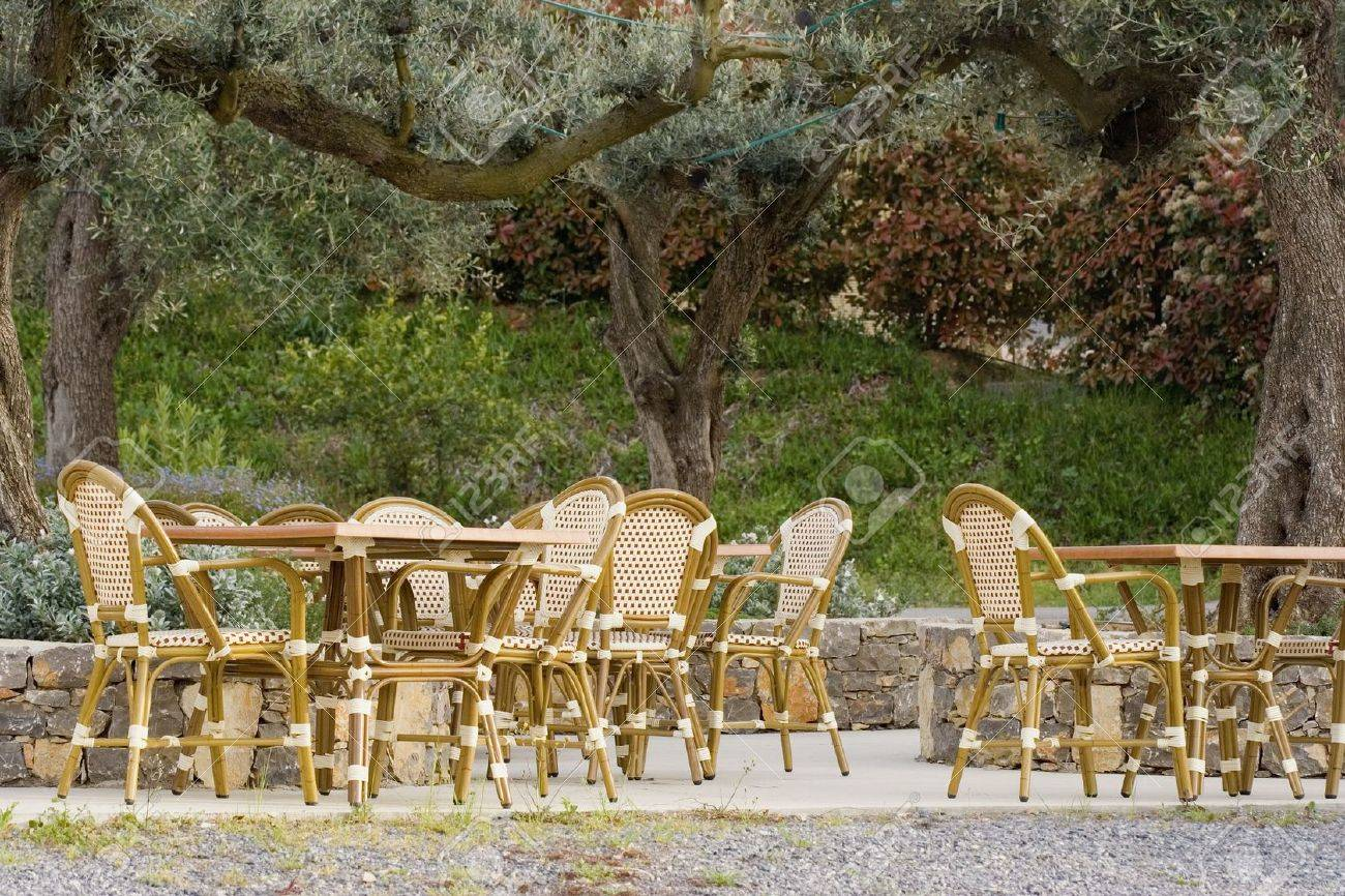 Pavement Cafe Under An Old Olive Tree   Tables And Cane Chairs Stock Photo    1885474