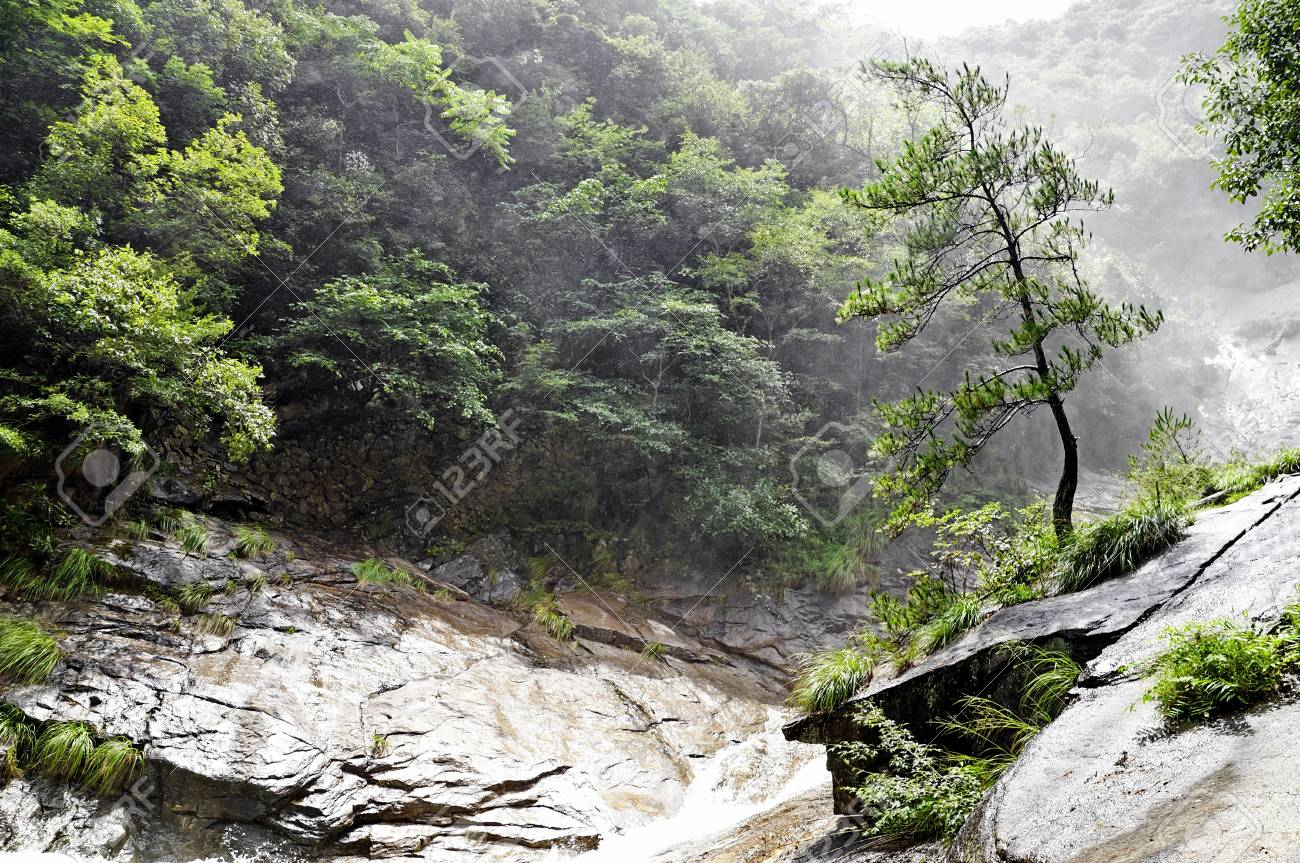 Alone chinese tree in foggy forest, China Stock Photo - 11317995