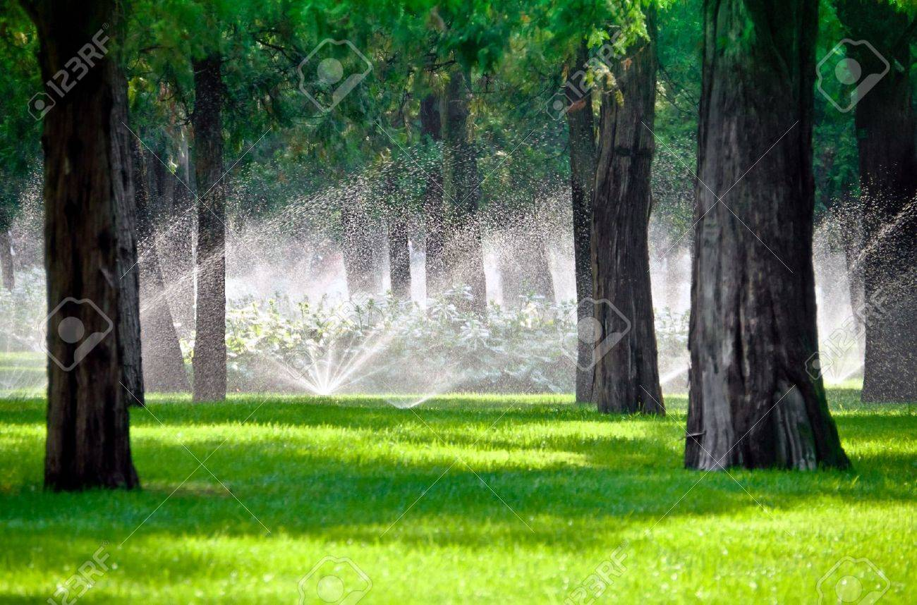 Sprinkler droplets in a lawn gardening with trees Stock Photo - 11816138