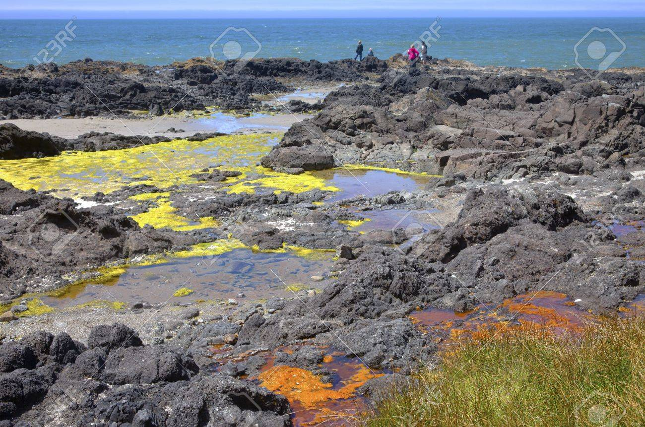 Lava Beds Colorful Algae Cape Perpetua Oregon Coast Stock