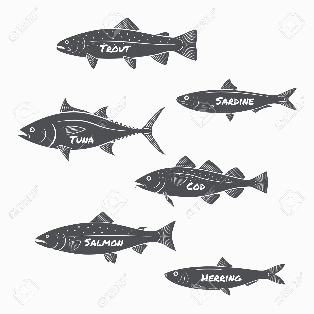 Set of fish silhouettes on white background. Trout, sardine, tuna, cod, salmon and herring labels. - 57737615