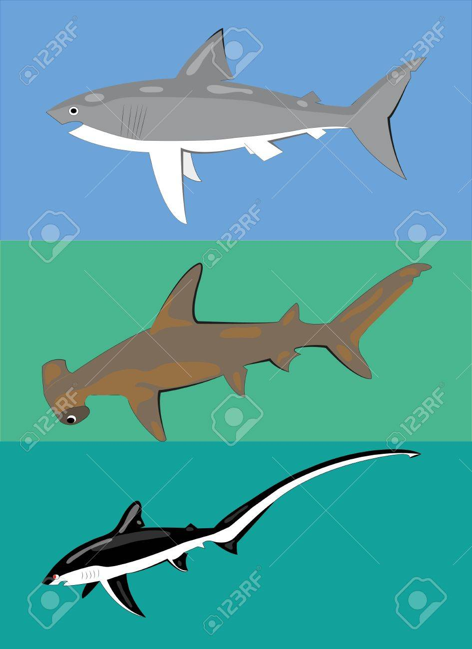 Different types of sharks. Stock Vector - 20221493