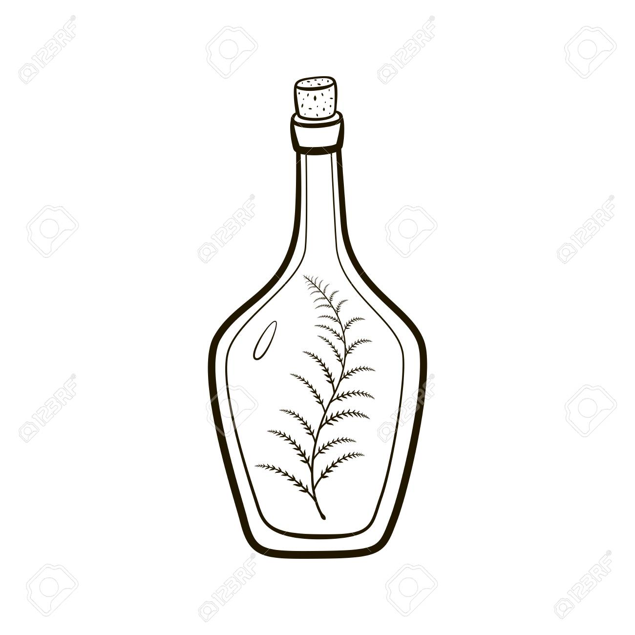 Vintage Bottle With Sprig Inside Hand Drawing Illustration On
