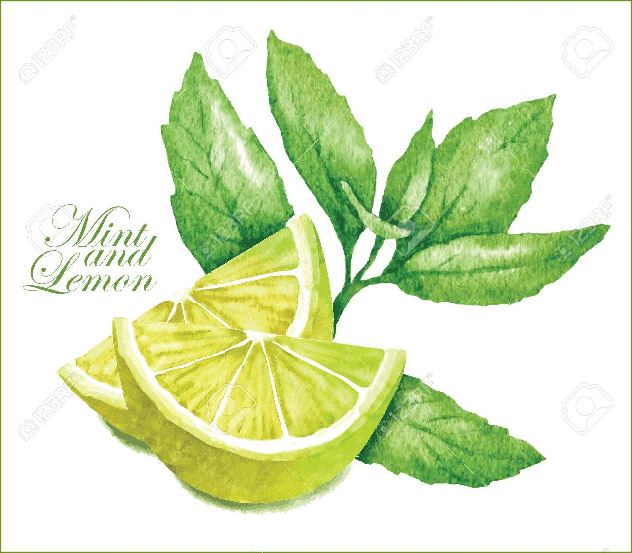 Hand made vector sketch of lemon with leaves of mint. - 45324039