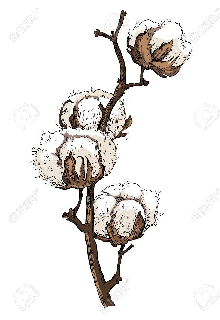 Hand drawn cotton brunch in vintage style - 48010767