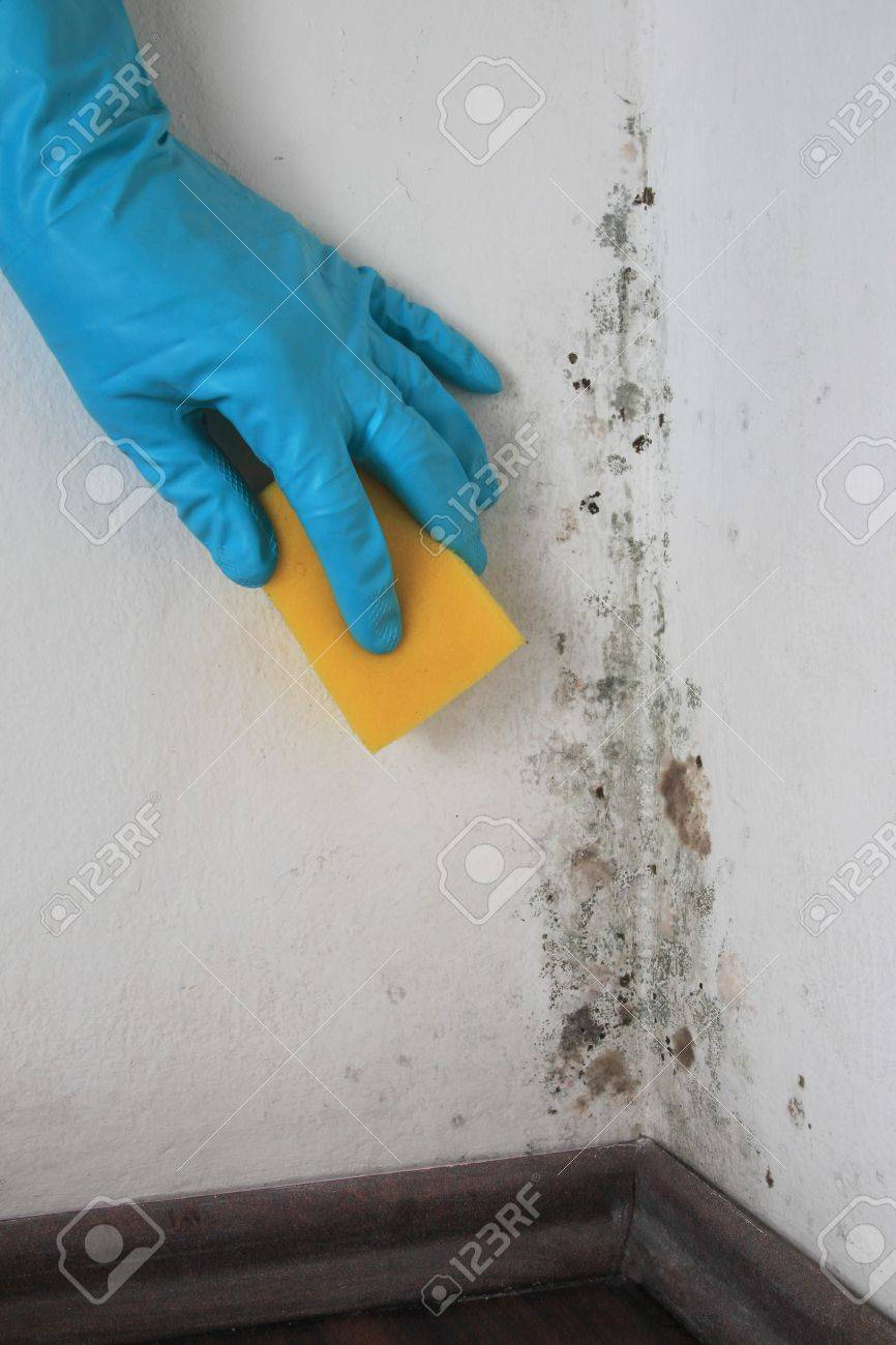 Removing Mold from a Wall in a room with Alcohol Stock Photo - 17854849
