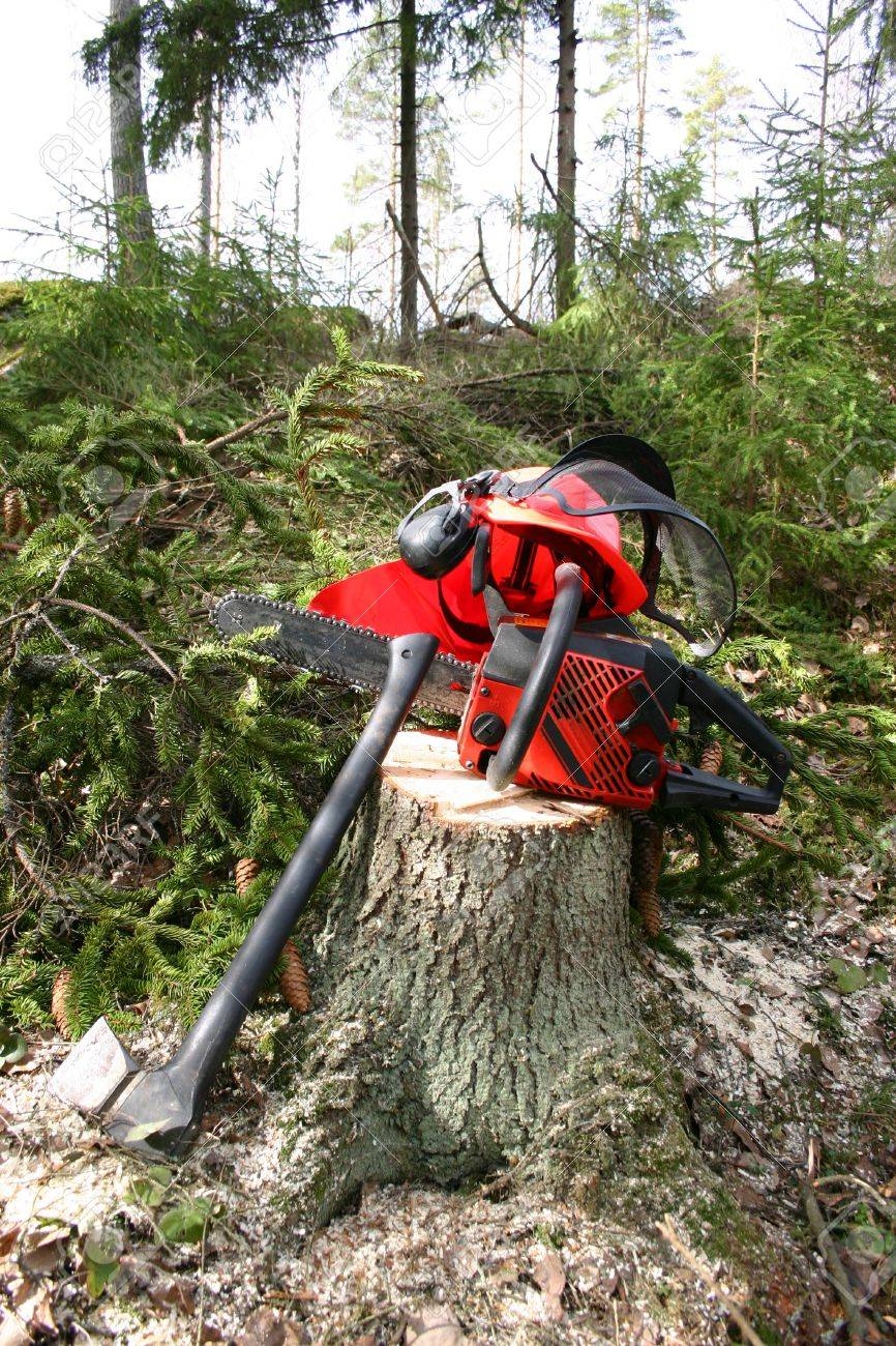 Logger equipment in forest Stock Photo - 10798282