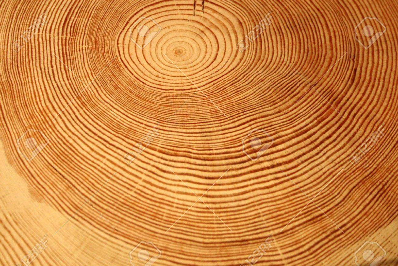 Year rings of a tree Stock Photo - 11697192