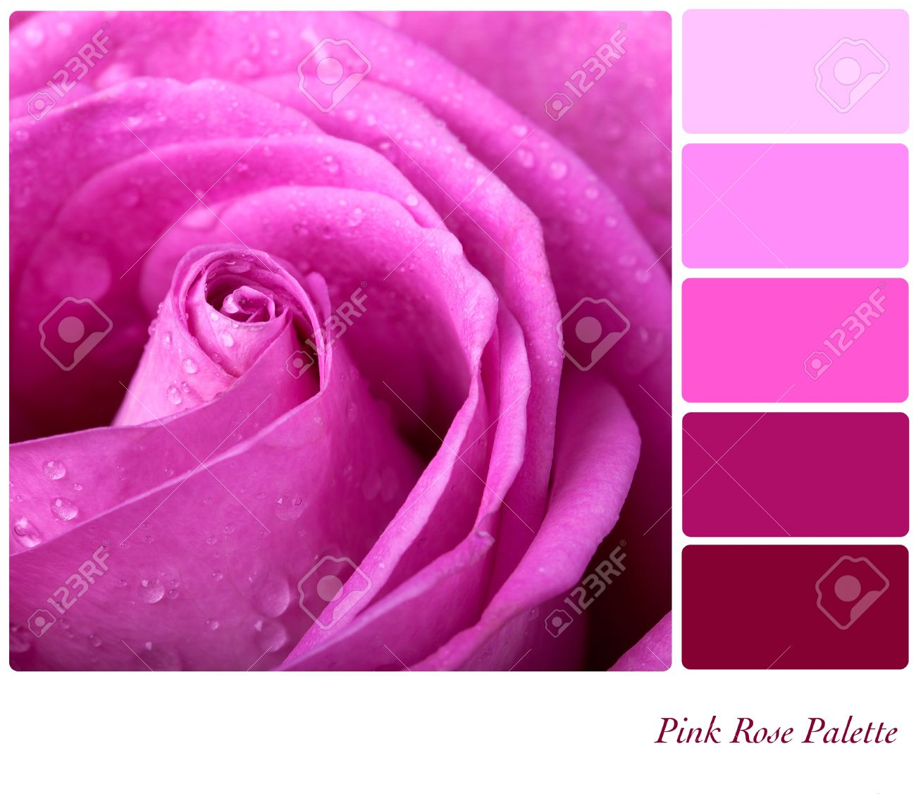 Pink Rose Colour Palette With Complimentary Swatches Stock Photo