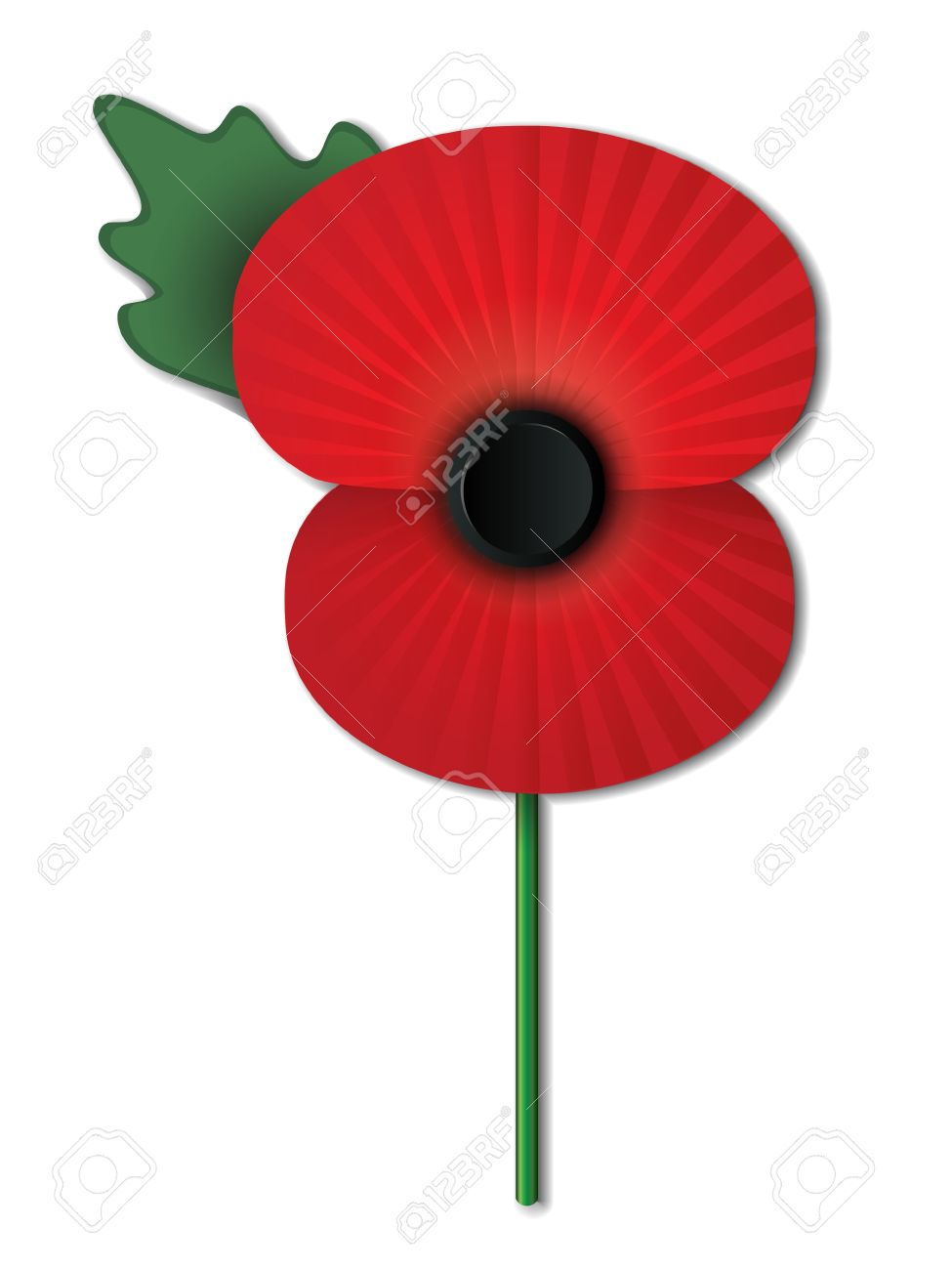 remembrance day poppy isolated on white background eps10 vector