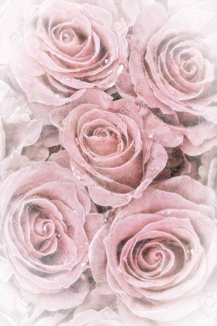 A Background Of Faded Roses Vintage Effect With Intentional Stock Photo Picture And Royalty Free Image Image 20691550