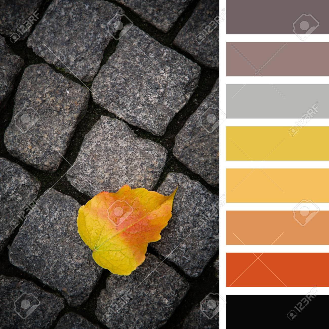Single Gefallenes Blatt Im Herbst Farben Uber Dunklen Kopfstein
