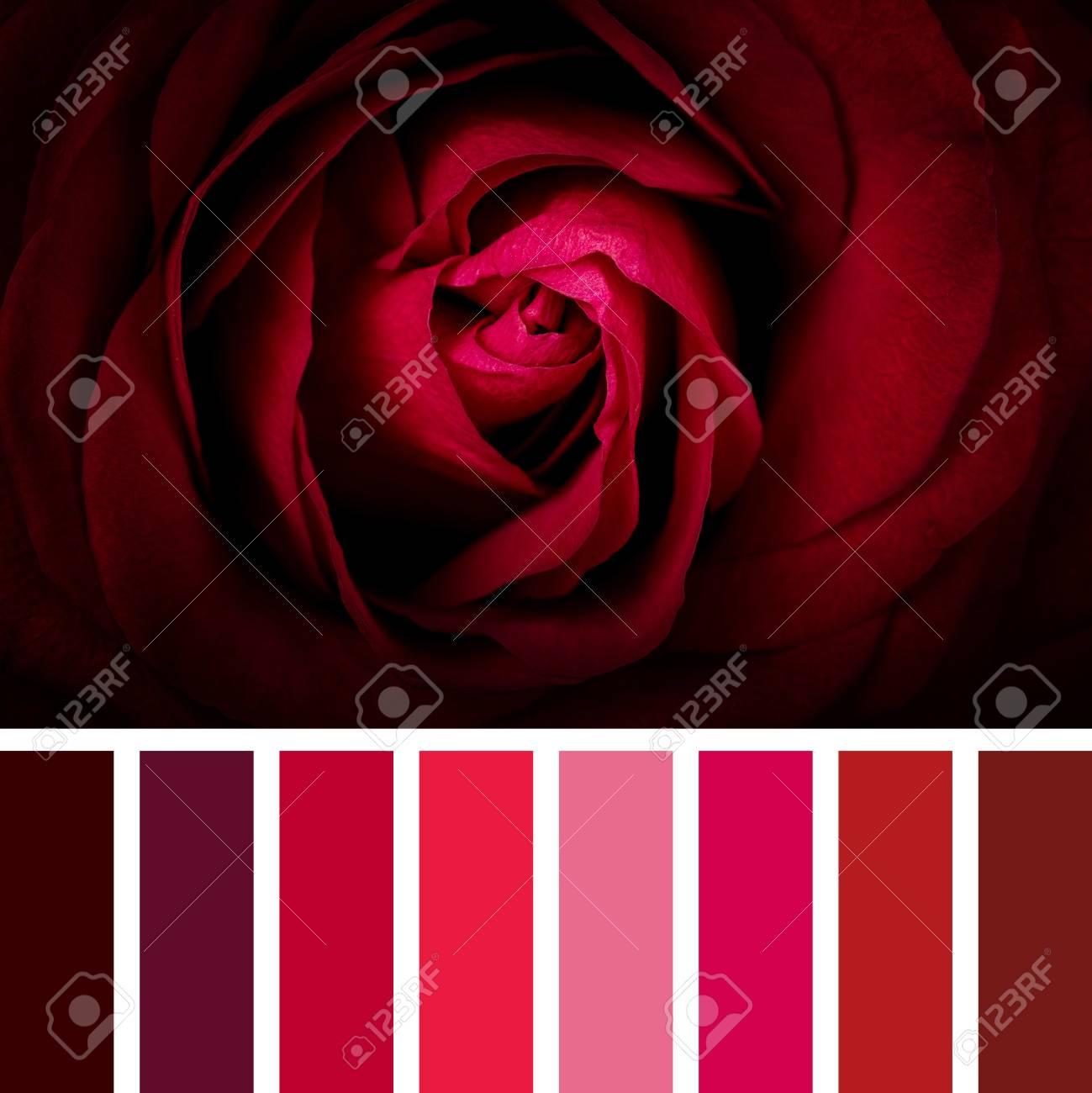 Scarlet Rose Nude Photos 20