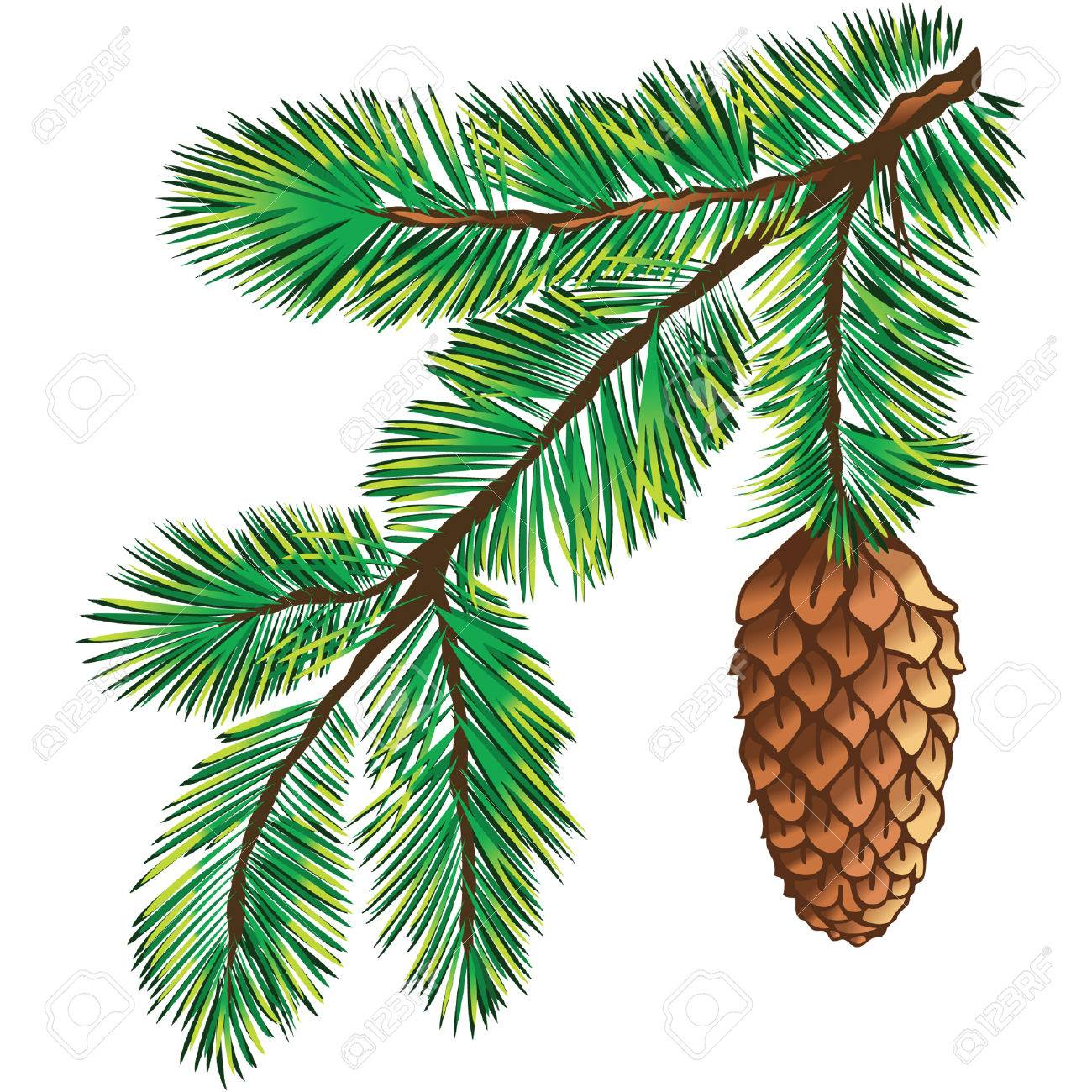 Green branch of pine-tree on white background Stock Vector - 7901013