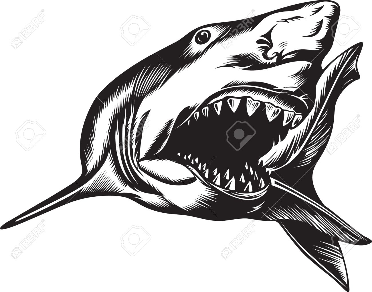 Big Aggressive Shark With Open Mouth Royalty Free Cliparts, Vectors ... for shark drawing open mouth  75sfw