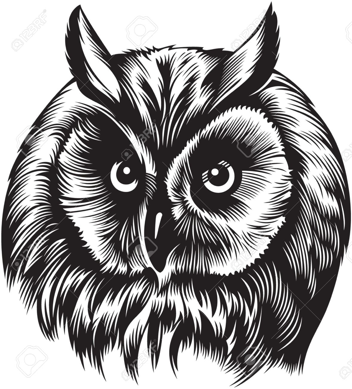owl bird head black and white style royalty free cliparts