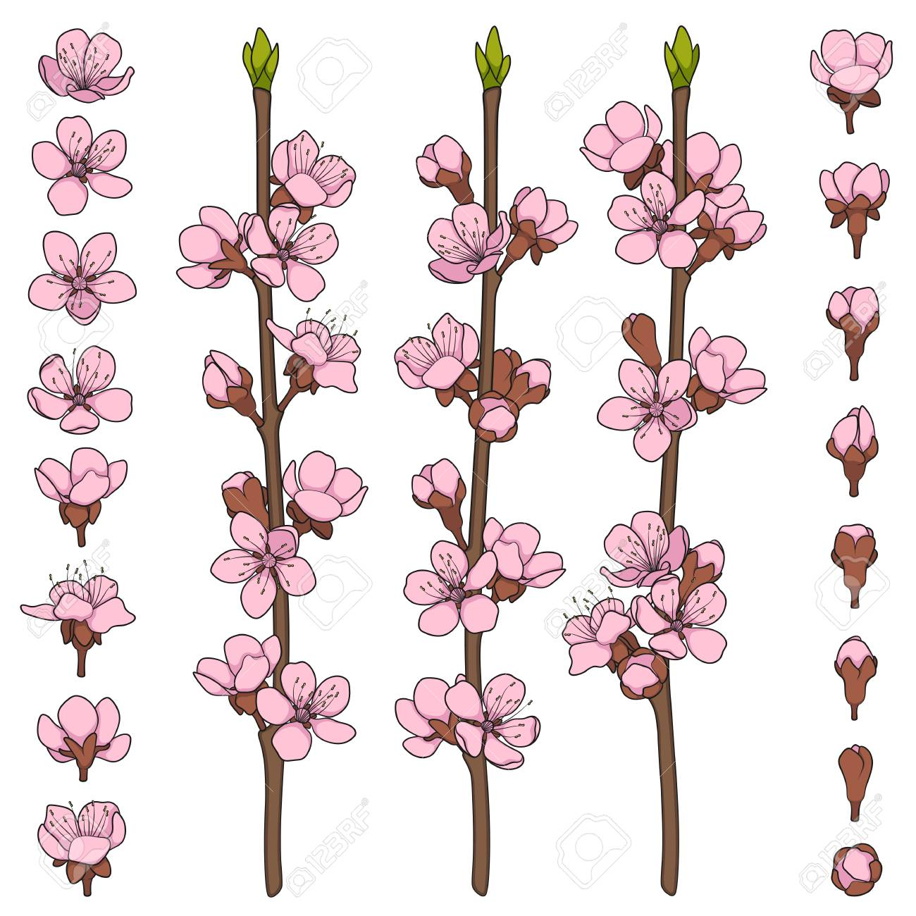 Set of color images with blossoming spring branches. Isolated vector objects on white background. - 115915226