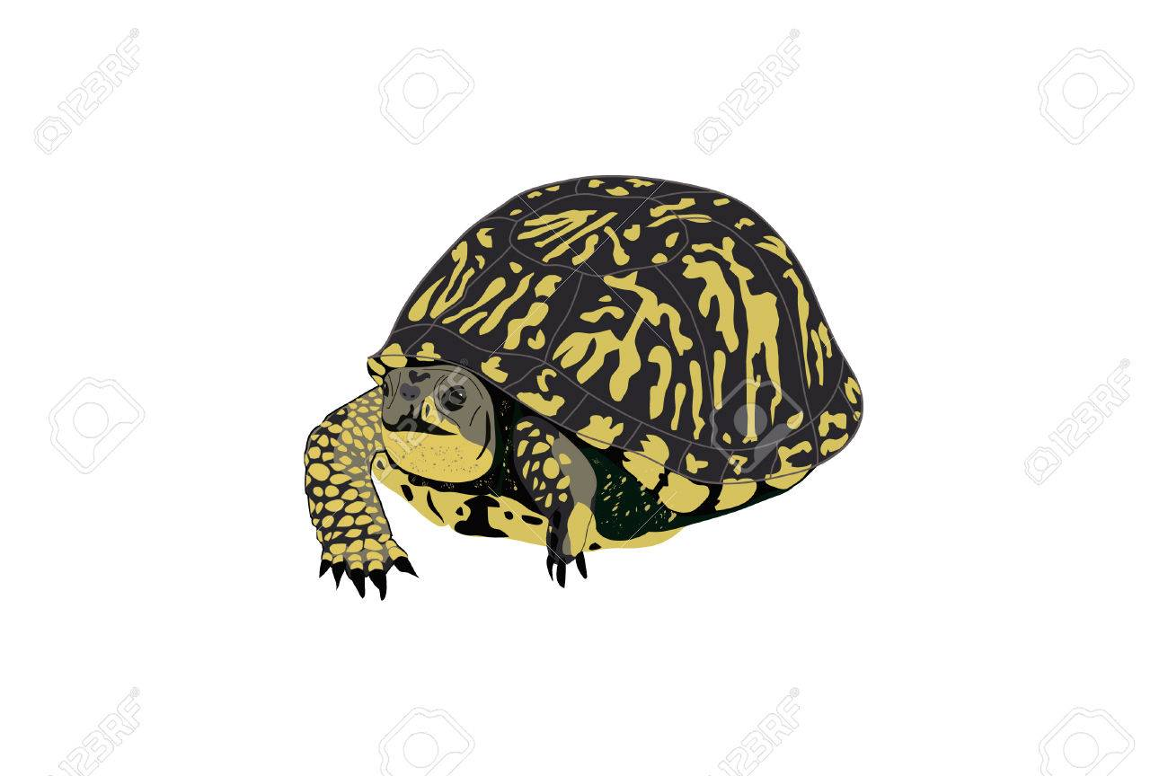 drawing of a box or paint turtle royalty free cliparts vectors and