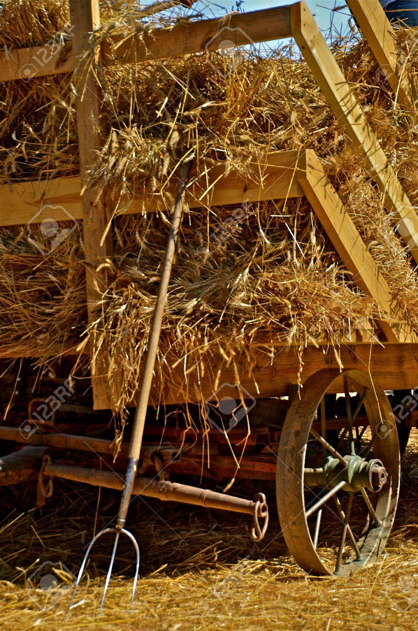Hay Rack Loaded with Sheaves of Oats Stock Photo - 27080698