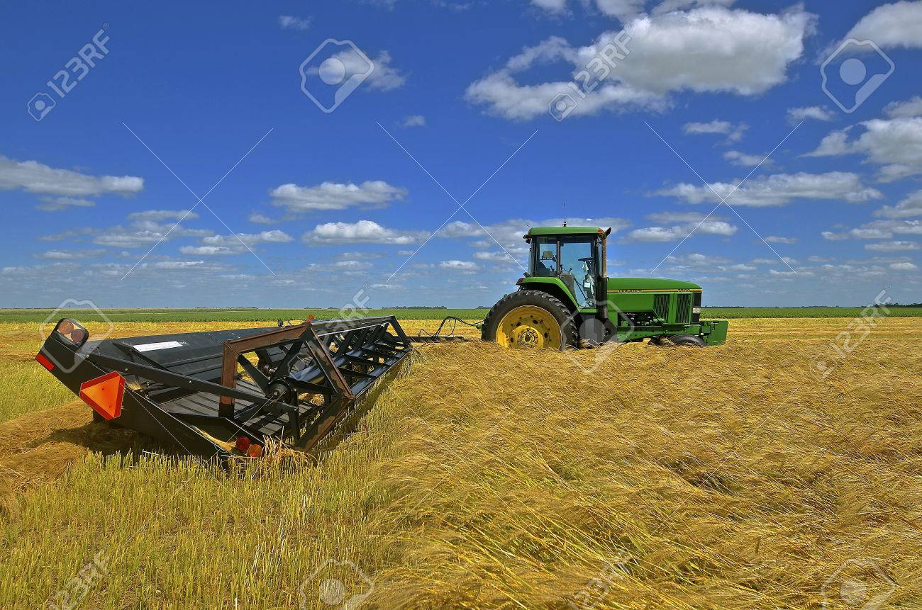 A new John Deere tractor is pulling a swather in a golden field