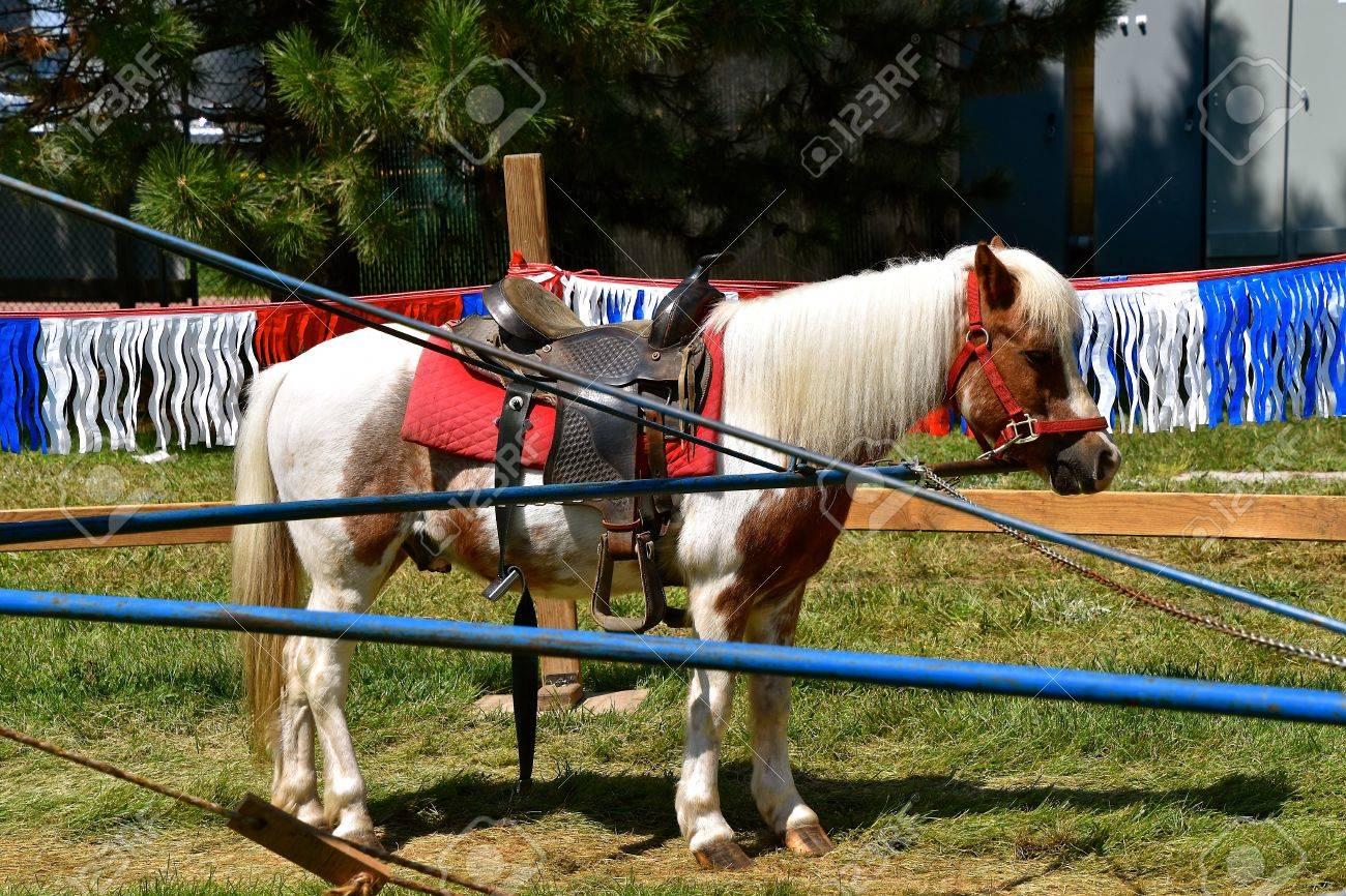 Ein Pony Mit Einem Sattel Ist An Einem Arm Eines Karussells Für