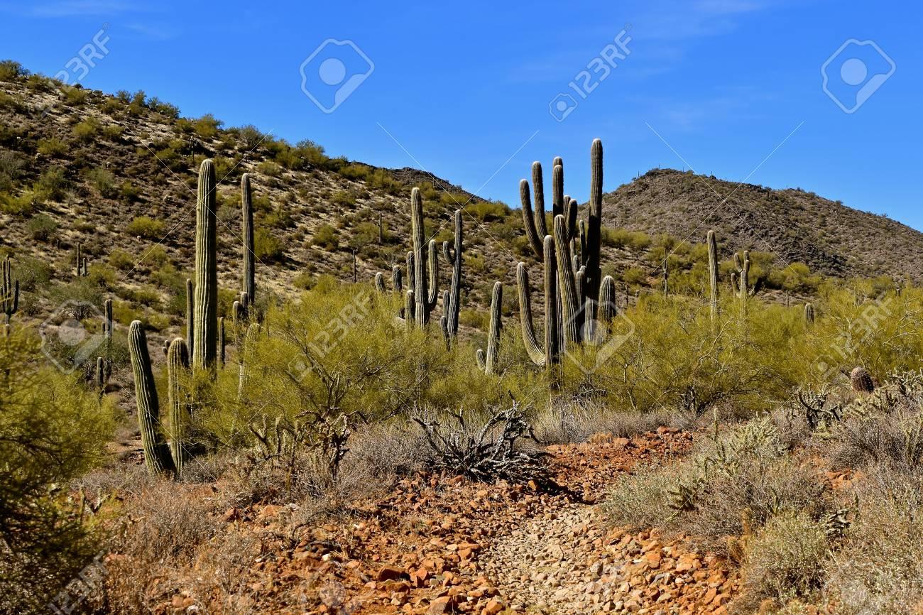 Mature community in a desert