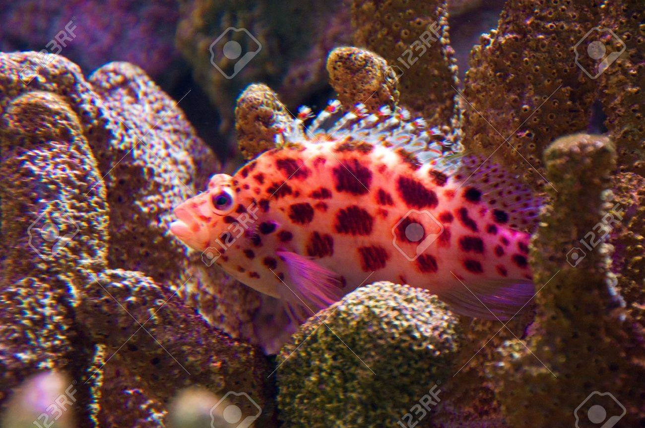 Brightly Colored Tropical Fish Amongst Hard Coral Stock Photo ...