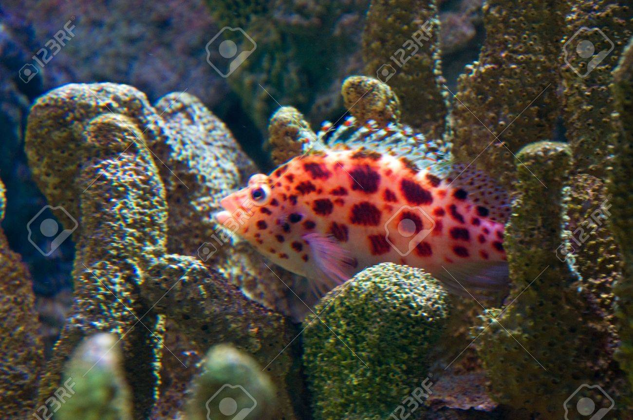 Brightly Colored Fish Amongst Hard Coral Stock Photo, Picture And ...