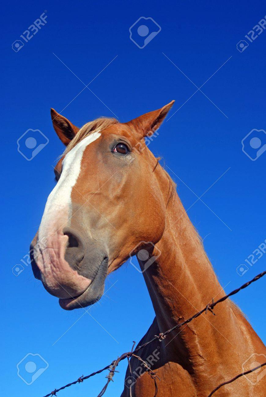 Funny Horse Face With Blue Sky And Barbed Wire Stock Photo Picture And Royalty Free Image Image 8218475