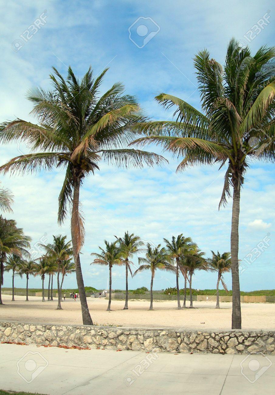 Pedestrian Walkway Promenade With Palm Trees And Sandy Beach South Miami Florida Stock Photo