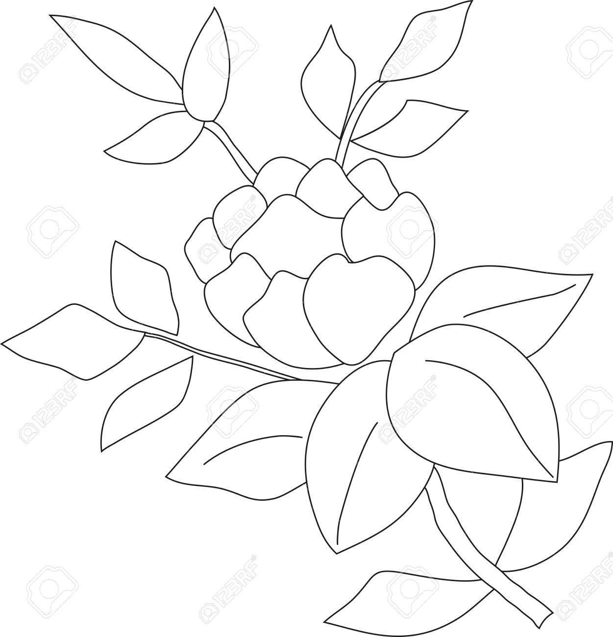 El Dibujo De Lápiz Manual De Una Rama De Rosa Con Una Yema Y Hojas ...