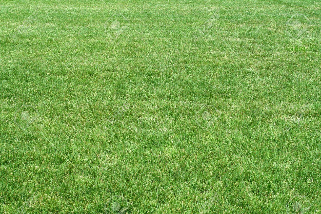 A grassy field stock photo picture and royalty free image image a grassy field stock photo 13142562 voltagebd Images